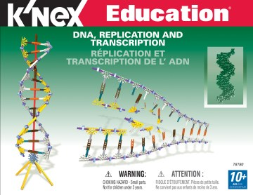 DNA Replication and Transcription