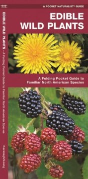 Edible Wild Plants: A Folding Pocket Guide to Familiar North American Species (Pamphlet)